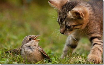 birds-tough-untasted-sit-throat-back-cat-sparrow-funny-nature-bird-ground-curiosity-hq-animals-pictures-for-desktop-736x460